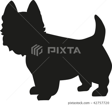 West Highland Terrier silhouette 42757720