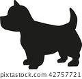 高地 高原 梗犬 42757721