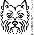 highland, terrier, westie 42757724
