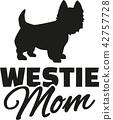 highland, terrier, westie 42757728