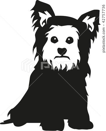 Yorkshire Terrier sitting 42757736