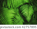 Beautiful fern leaves, macro 42757895