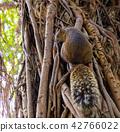 赤腹松鼠 台湾台北二二八公园のタイワンリ Red-Bellied Squirrel 42766022