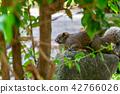 赤腹松鼠 台湾台北二二八公园のタイワンリ Red-Bellied Squirrel 42766026