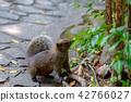 赤腹松鼠 台湾台北二二八公园のタイワンリ Red-Bellied Squirrel 42766027