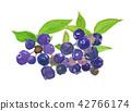 블루 베리 래빗 아이 Vaccinium virgatum 42766174