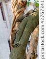 赤腹松鼠 台湾台北二二八公园のタイワンリ Red-Bellied Squirrel 42767341