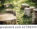 Closeup tree stumps among a forest, high resolution 42768344