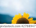青蛙和向日葵B. 42768947