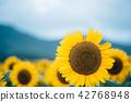 青蛙 向日葵 花朵 42768948