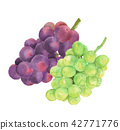 Two kinds of grape Aurora Black Shine Muscat 42771776