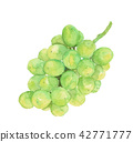 shine muscat, fruit, fruits 42771777