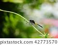 곤충, 벌레, 잠자리 42773570