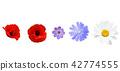 Different garden flowers on white background 42774555