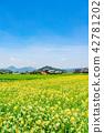 [가가 와현] 해바라기 밭 42781202