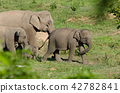 Asian elephants is eating solid in Thailand forest 42782841