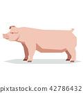 Flat geometric Chester white pig 42786432