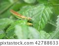 사마귀, 곤충, 벌레 42788633