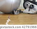 munchkin, kitty, pussy 42791966