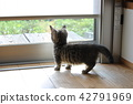 munchkin, kitty, pussy 42791969