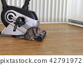 munchkin, kitty, pussy 42791972