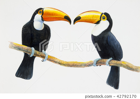 Toucan bird sitting on the branch 42792170