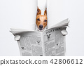dog reading newspaper 42806612