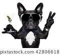 peace cocktail dog 42806618