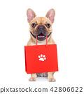 sale shopping dog 42806622