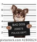 police mugshot dog 42806624