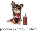 office worker boss dog 42806629