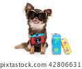 dog on summer vacation 42806631