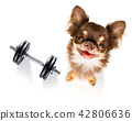 dog  with dumbbell 42806636