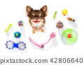 close up curious dog looks up with toys 42806640