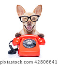dog on the phone 42806641