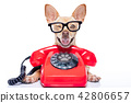 dog on the phone 42806657
