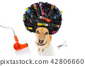 bad hairdo on dogs 42806660