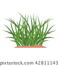 Bunches of green grass on an earthen mound. 42811143
