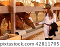 rider woman in helmet with whip near horses 42811705