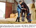 Dark-haired horsewoman wearing dark riding boots petting dark horse 42812637