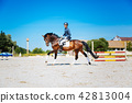 Promising equestrian riding his brown horse very fast 42813004