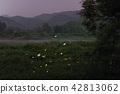 螢火蟲 夏天 昆蟲 42813062