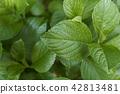 수국, 자양화, 식물 42813481