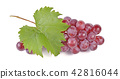 red grapes isolated on white background 42816044