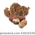 chestnuts on white background 42816249