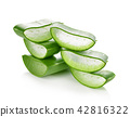 aloe vera fresh leaf isolated white background 42816322