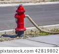 Hose connected to red fire hydrant 42819802