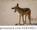 animal animals dog 42819821