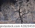 樹木 樹 木頭 42820459