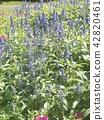 灰藍色 花朵 花 42820461